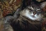 e601a-siberian_cat_winking